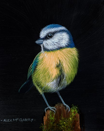 Quiet Blue Tit by Alex McGarry - Original Painting, Canvas on Board
